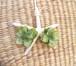 Girly Flowers  Pierce -Green-