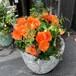 室内向けコベントガーデンのオシャレギャザリング鉢植え