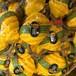 【FONG HOMM】 フルーツ石鹸 パイナップル/ Pineapple Soap 100g ×3個