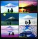 富士山と親子猫 ポストカード6枚セット