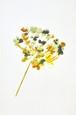 ニラの花 Painting(M)