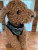puppia SENTINEL HARNESSハーネス  S/M/L