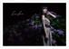 Cukaクリアファイル(紫陽花)チョイキズ特価