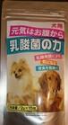 犬用乳酸菌