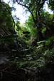 森 小さな水の流れ(奈良県 松尾山)