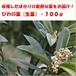 収穫後発送■びわの葉・生葉・100g・ビワ/枇杷/果物/葉/お茶/入浴剤/加工/新鮮