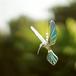 Hummingbird ( M-iridescent blue )