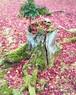 切り株とピンクの絨毯