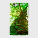 屋久島の巨木 側表面印刷スマホケース iPhone6/6s ツヤ有り(コート)