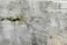 【10枚限定・額装写真】壁の水墨画