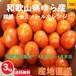 【早期予約受付中】和歌山県由良町産 柑橘 セミノールオレンジ【ご家庭用】サイズ混合 3kg /箱【期間限定販売:4月16日~4月末日】【送料無料】