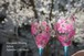 【桜】桜ワイングラス1つ(手描きガラス絵付け)/母の日ギフト・誕生日プレゼント・結婚祝い・退職祝い