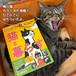 「ドコノコの本 猫と暮らす」 桶スポ購入特典ハガキ付き