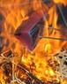 【1日限定3セット】バームクーヘン豚の生姜豚しゃぶコース♪♪(3~4名様)【冷蔵発送】・・[送料無料]のお得セット!!