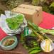 山里料理みたき園「ふるさと便ミニのセット」