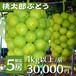 【完売御礼!】スーパープレミアム桃太郎ぶどう 1kg以上/房
