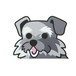 ミニチュアシュナウザー(大) 犬ステッカー
