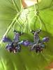 Hulu Wulu  Real orchid
