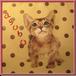 サブバッグ アビシニアン仔猫