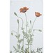 ティータオル キッチンクロス KOUSTRUP & CO. - Prickly Poppy とげケシの花