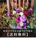アレンジメント M【 おまかせ】(新潟市中央区限定)