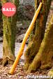 SALE No.027 ディジュリドゥ(木の種類:エンジュ / C )