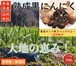 【ご家庭用】青森県産 黒にんにく バラ詰160g×3パックセット販売【送料無料】産地直送