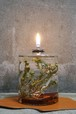 PLANTAHOLIC OIL LAMP No.9 -Cotton Bush-