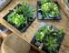 造花 多肉植物 壁掛け(3個アソートセット)