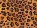 輸入転写紙 A3チンツ 【Leopard】