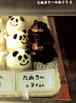 たぬきケーキめぐり6
