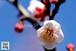 青葉の梅林2~Plum grove~③