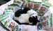 【ネコ支援】 館の猫のごはん 焼津なまり