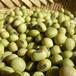 青大豆・サトウイラズ 4.5kg(平成28年産自然栽培)