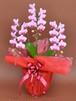 【生花】 胡蝶蘭 ピンクミディ 3本立ち 27輪以上