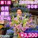 300輪‼️ カンパニュラ 爽やかな高原の花
