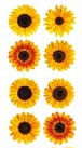MINI SUNFLOWERS / PH