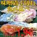 味噌漬け 食べ比べ 4種【贈り物】 【お節】 【朝食】 【お弁当】 鰆 金目鯛 鮭 からす鰈