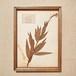 植物標本 フレーム 1929 vintage 18MAR-VSH04