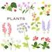 草花 plants 0004-A