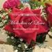サックスで奏でる愛のメロディー SFCD-14