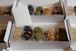 【10/13以降発送】南部小麦クッキー5種セット<10月>(内箱入)