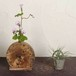 流木の花器、フラワーベース、15