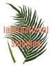 海外送料-International Shipping Fee