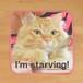 ミニタオル「I'm Starving! おなかへったよう!」