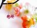 金平糖イヤリング【純白×紅×紫】小さめ(1.0cm)