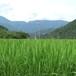 田んぼと田舎の風景
