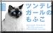 ペット名刺_長方形タイプ_瞳がアクセントカラーデザイン(1個50枚)_rec_w004-c