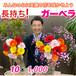 特選 ガーベラ10本セット 50%引【いわい生花TVショッピング】