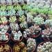 多肉植物苗5品種セット